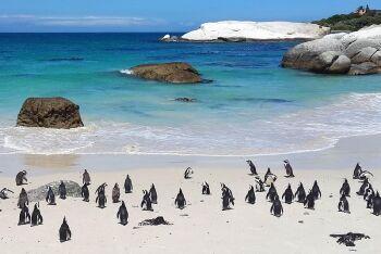 Penquins, Boulders Beach, Cape Town, Western Cape