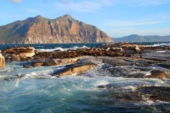Cape fur seals, Seal Island, Cape Town, Western Cape